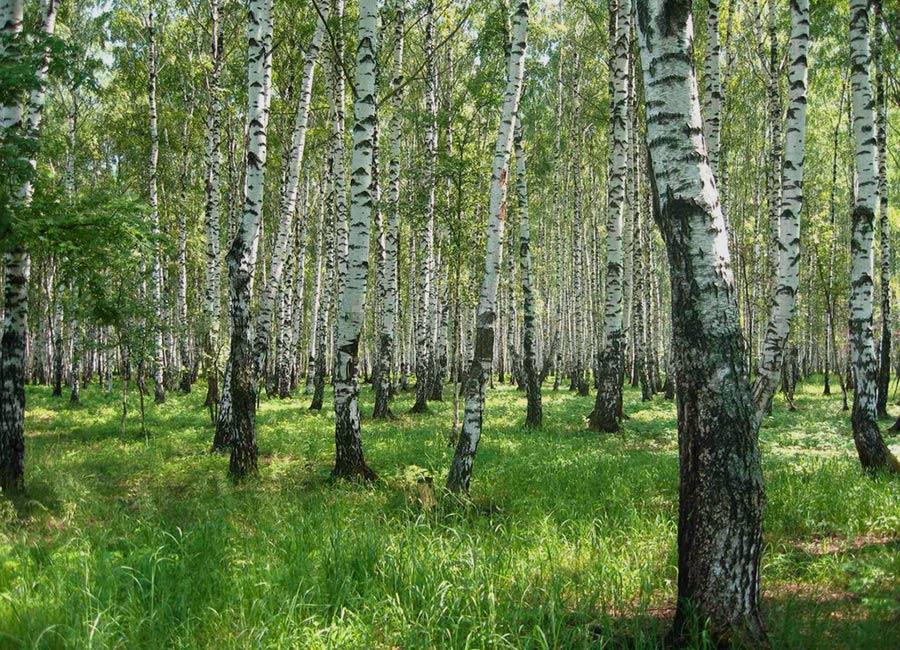 Взять в аренду лес