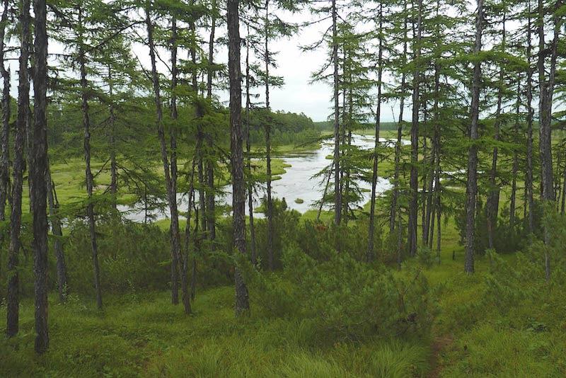 Новое в законодательстве о лесах лесные аукционы на практике  В целях приведения нормативно правовой базы лесопользования к завершенному виду за основу классификации лесных ресурсов принята следующая градация